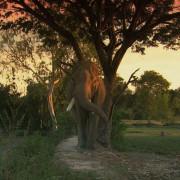 elephant whisperer, profilm